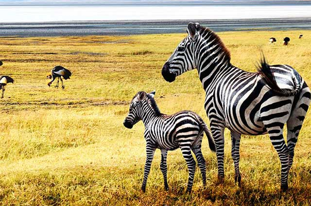 TANZANIA & MOZAMBIQUE HOLIDAY