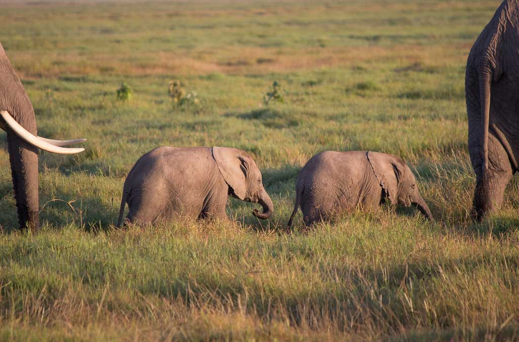KENYA SAFARI AND MOZAMBIQUE HOLIDAY