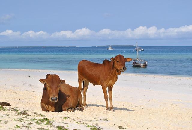 ZANZIBAR ISLAND HOLIDAY