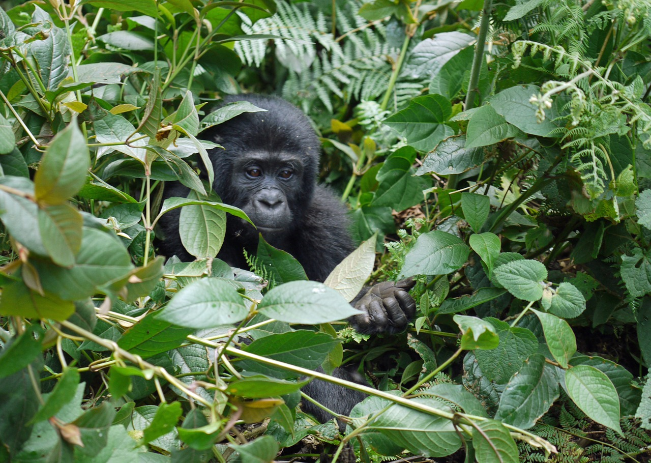 QUEEN ELIZABETH AND BWINDI NATIONAL PARK