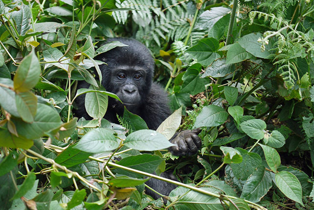 QUEEN ELIZABETH & BWINDI NATIONAL PARK