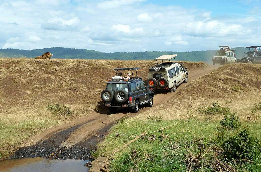 safari-1845202_1280