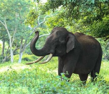 animal-elephant-ivory-982021