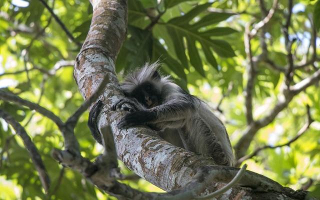 monkey-3560043_1280